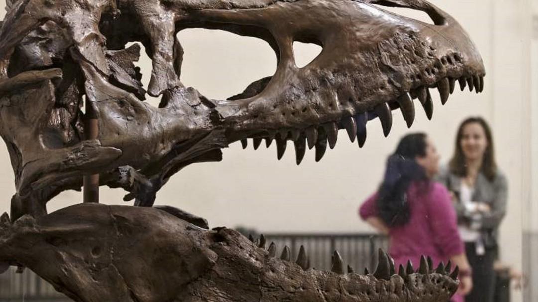 Dinosaurios Caracol Radio Definitivamente, villa de leyva un destino para gente inteligente, y enamorada de la vida. dinosaurios caracol radio